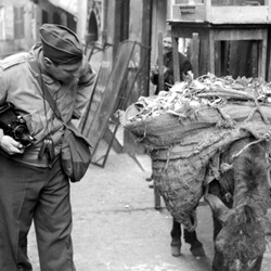 World War II soldier with mule