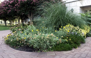 Flower bed at Southern Methodist University