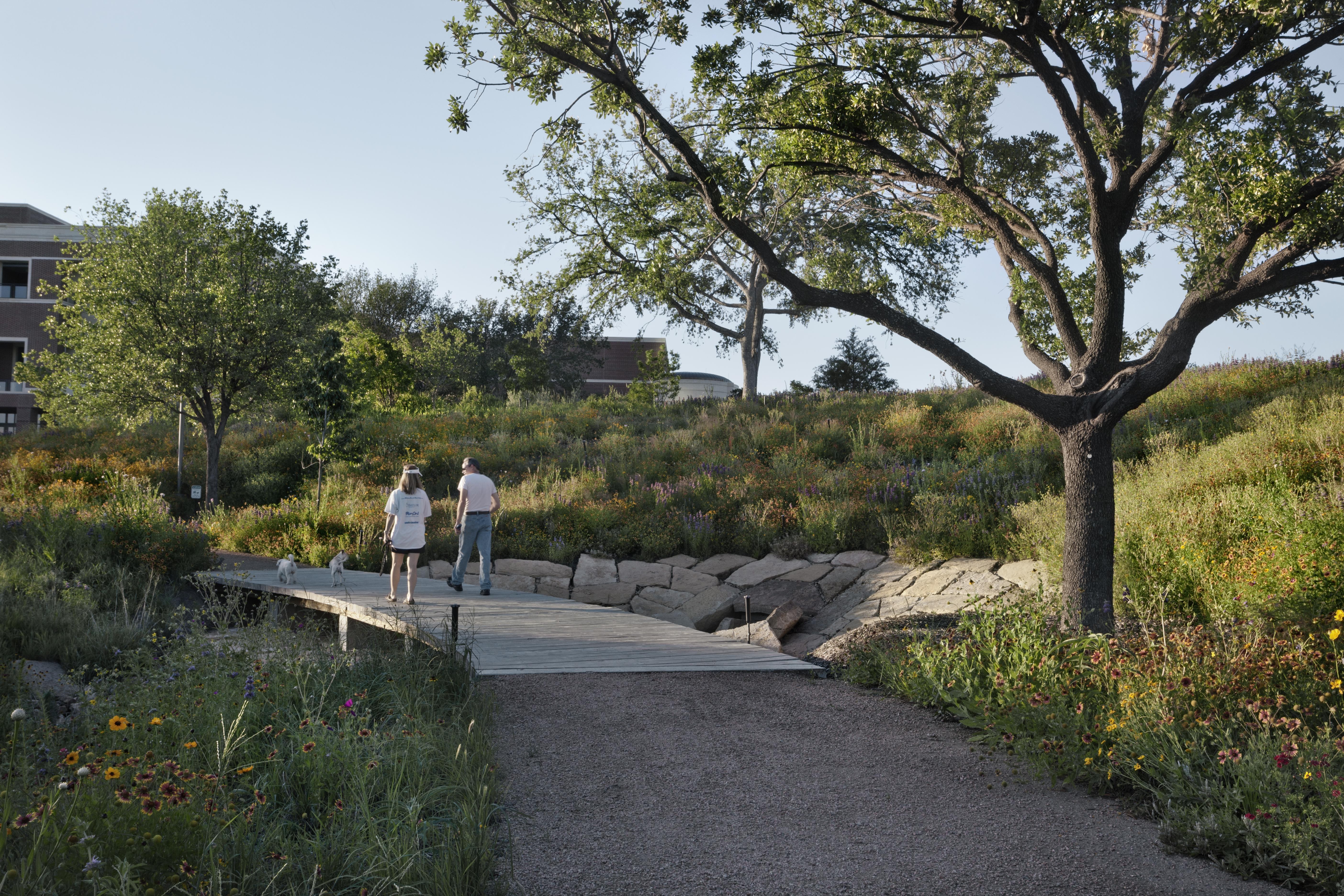 Spring's first wildflowers will be in bloom at SMU's Community Day at the 15-acre Native Texas Park at the George W. Bush Presidential Center, a short walk or shuttle ride from Meadows Museum.