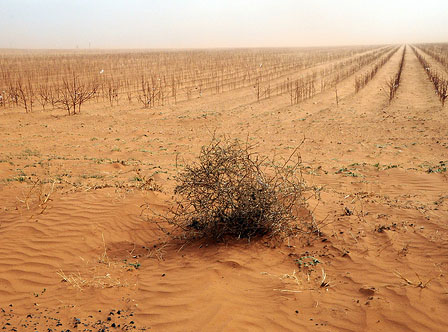 West Texas drought