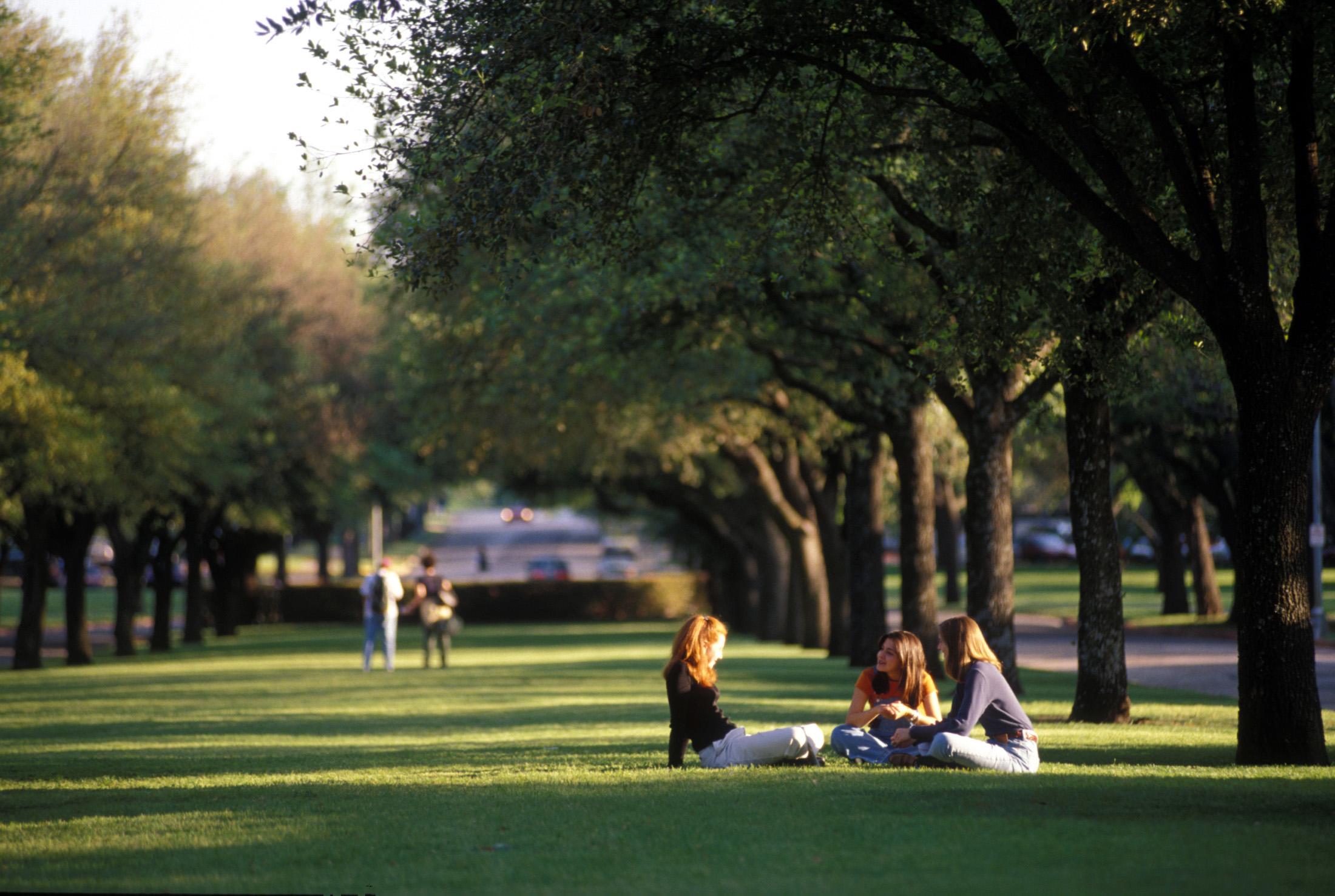 smu campus trees