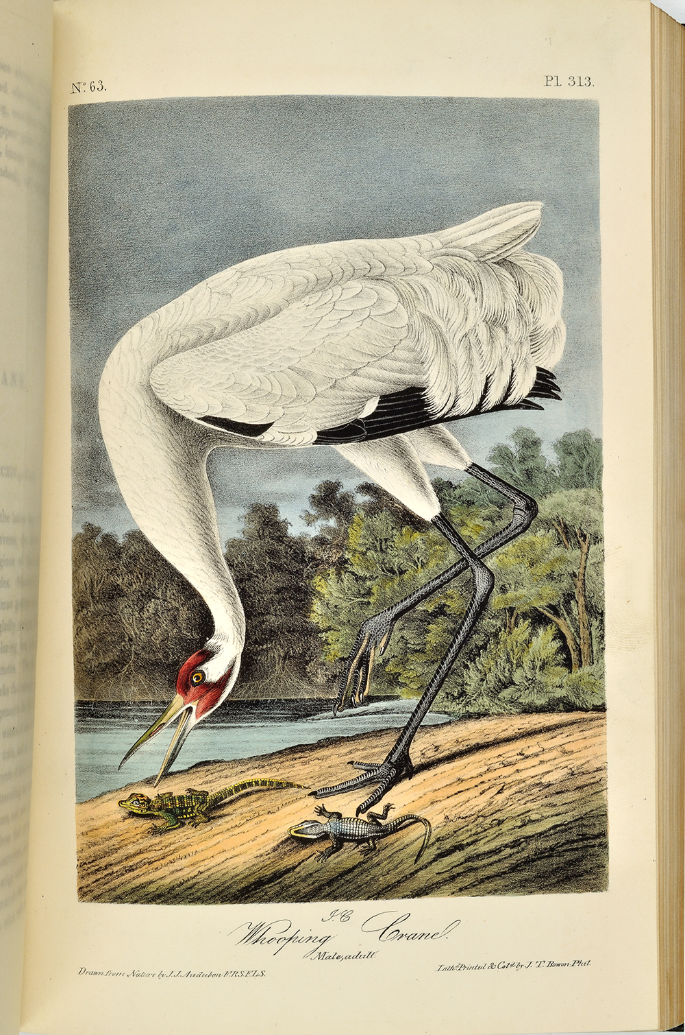 John James Audubon 1785 1851 The Birds Of America From Drawings Made In United States And Their Territories New York J