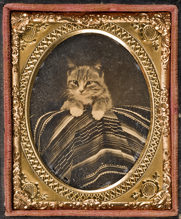 [Cat posed with Mexican serape], ca. 1866-1868