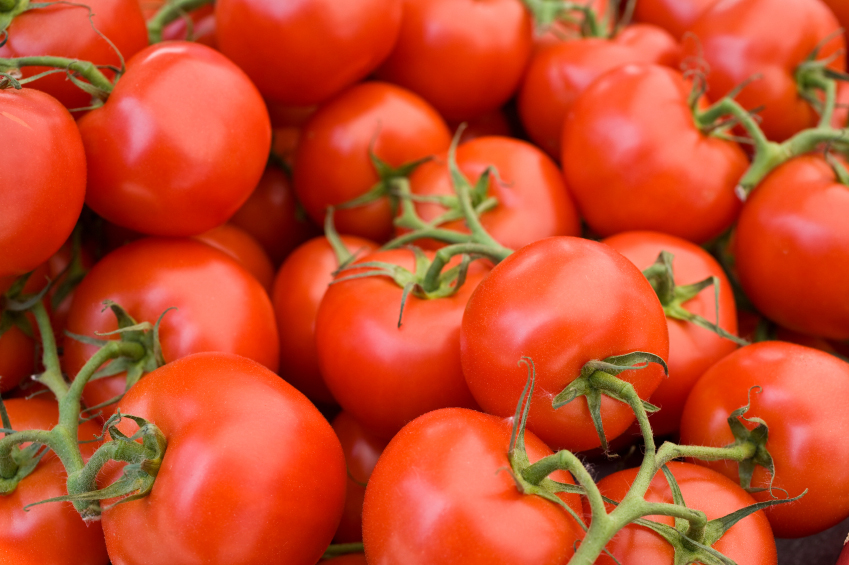 Stock photo of tomatoes on the vine
