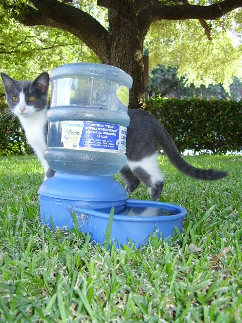 Feral Lily Water Bowl