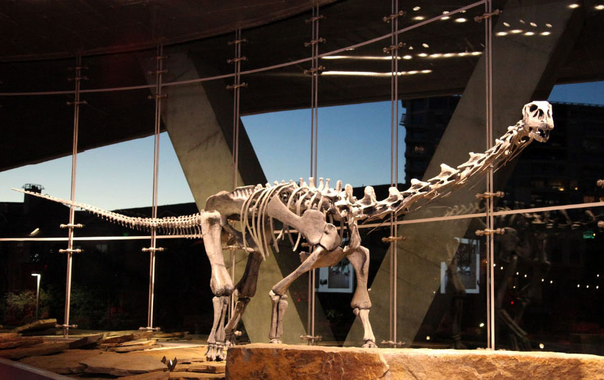 Malawisaurus at the Perot Museum
