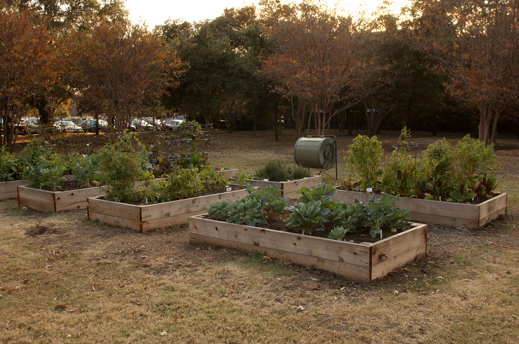 SMU's Community Garden Project